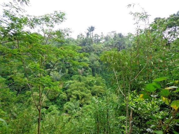 Tanah jual di Ubud Bali