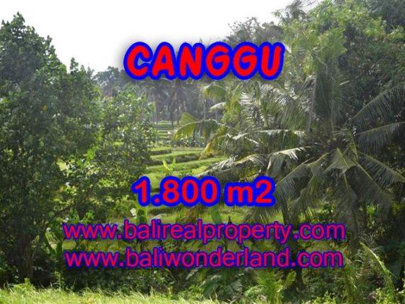 Jual tanah di Bali 1.800 m2 view sawah,sungai di canggu brawa