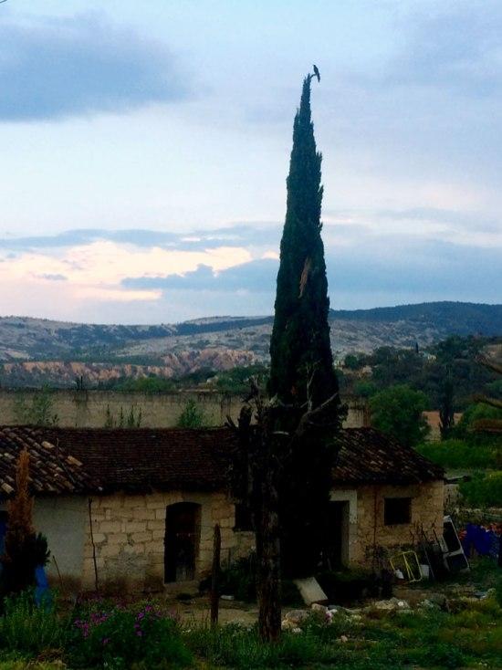 Juan Carrizo | Viajes - En la punta del pino