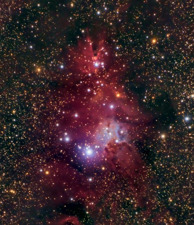El árbol de Navidad (NGC 2264)