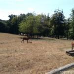 Wildtierpark