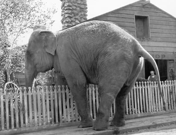 adult child-elephant-boundary