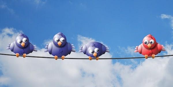 midlife loneliness+birds