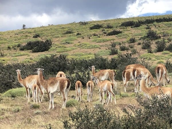 vacation with adult kids+guanacos