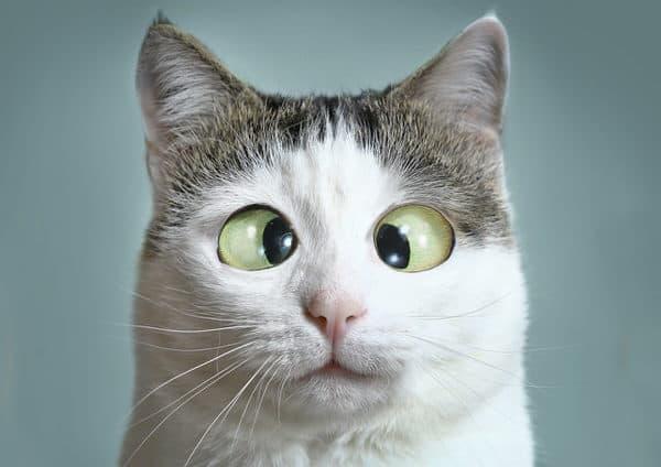 humor amid stress+cross-eyed-cat