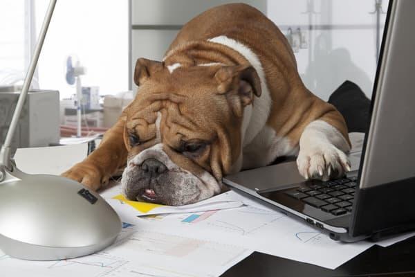 dementia and iPhone+tired-bulldog
