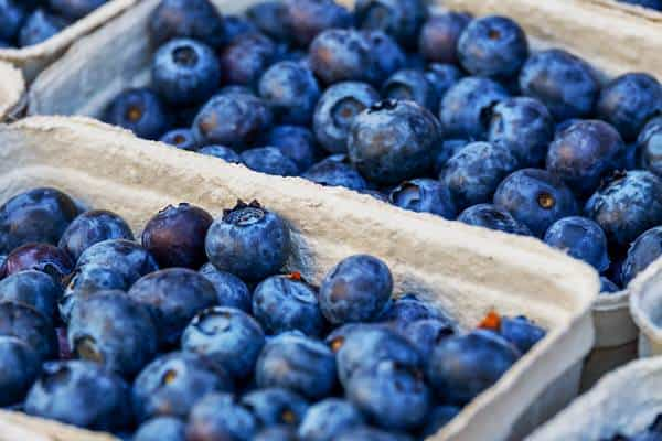 my experience on the MIND diet+blueberries