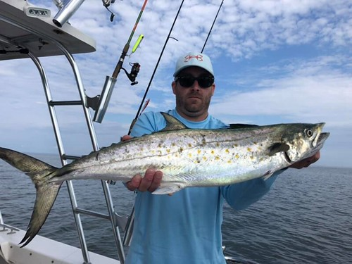 Photo of Man holding a large Spanish Mackerel