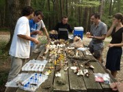 The Vilgalys lab leads a mushroom ID Tweet-up workshop in Duke Forest, August 2013