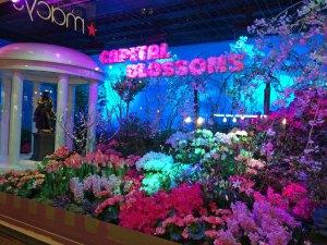 Macy's Flower Fesitval 2016