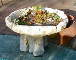Bird bath = succulent nursery