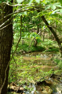 1. Spring-fed stream leads to North Fork of Roanoke River..