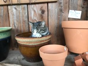Grumpy ol' cat, no hat where he sat.