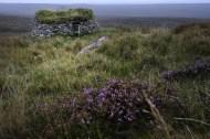 Sheiling on Bhragair moor, Isle of Lewis_13975