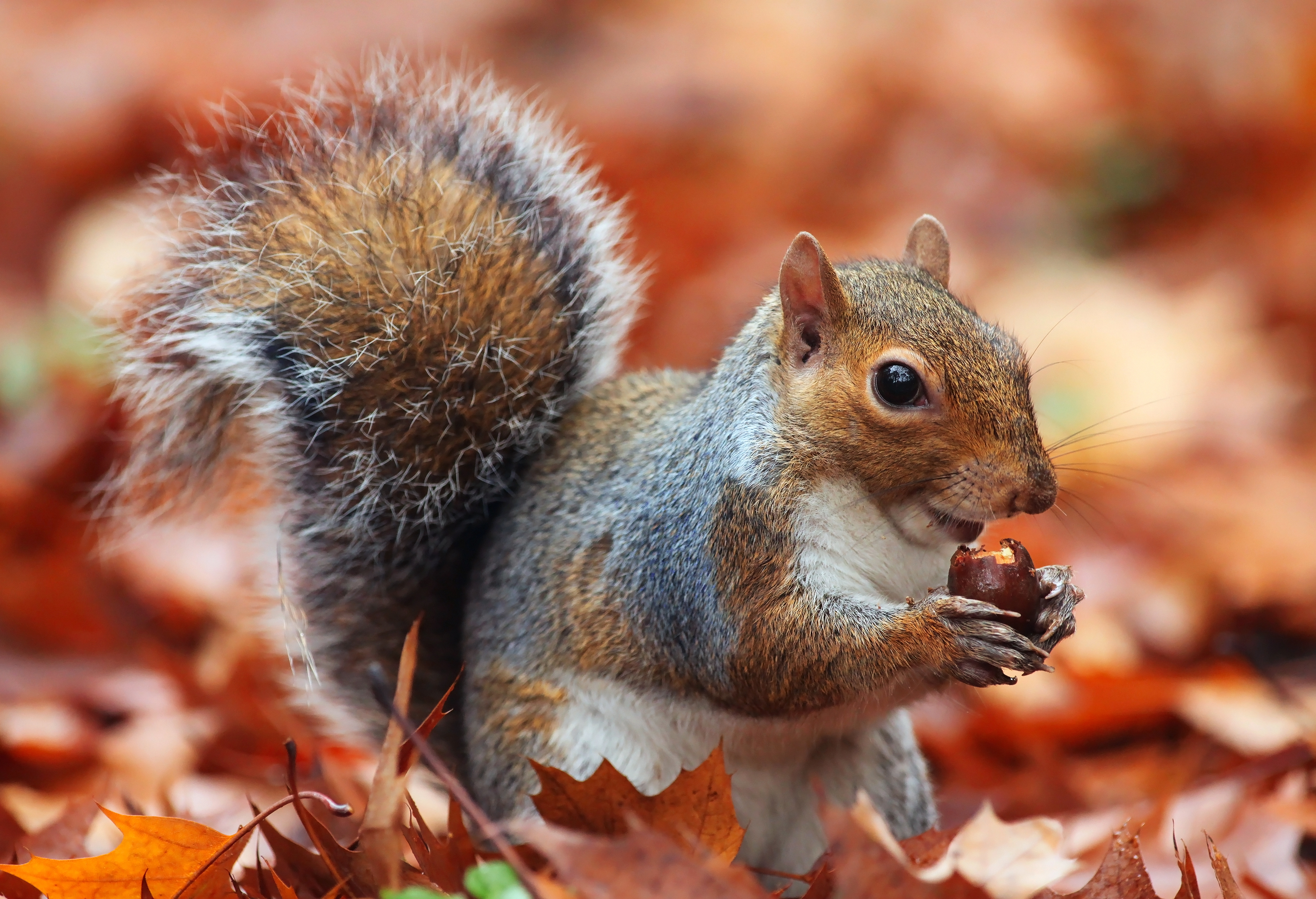 A Squirrel S Guide To Success On Pbs Is No Tall Tail