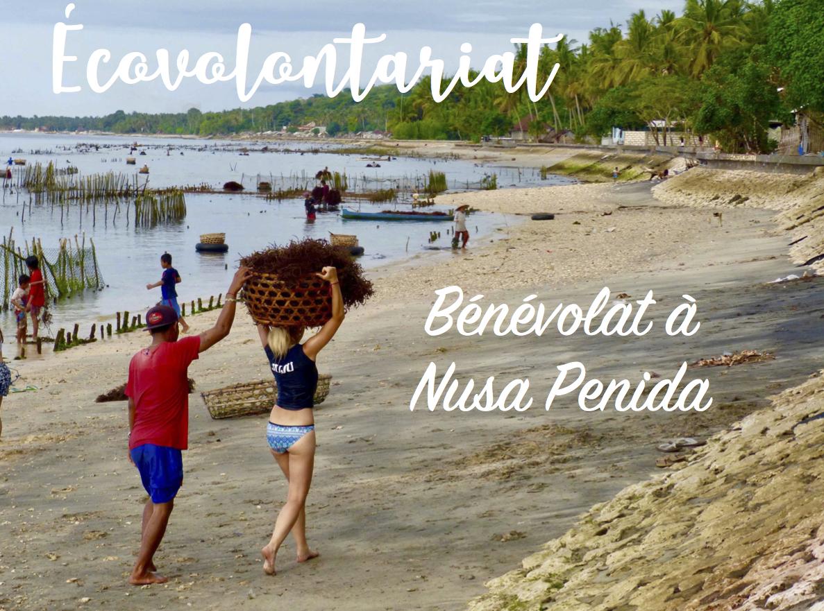 Écovolontariat : Bénévolat sur l'île de Nusa penida