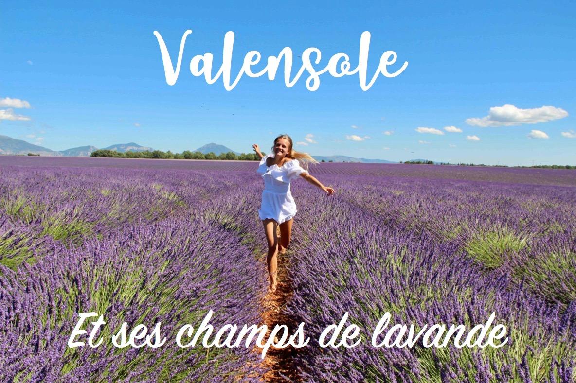 Read more about the article Le plateau de Valensole et ses champs de lavande