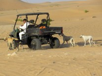 Walking the dogs desert style?