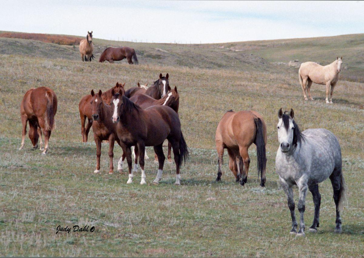 Horses In Colour