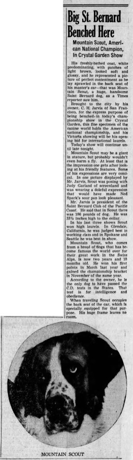 May 20, 1939 JUDY'S ST BERNARD Times_Colonist (Victoria BC)