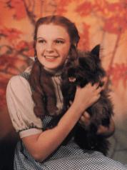 DorothyTotoLarge