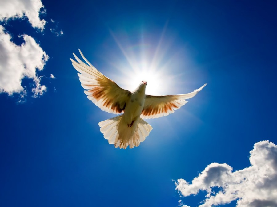 Spirit dove
