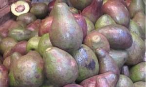 Avocados at market in Dodoma, Tanzania