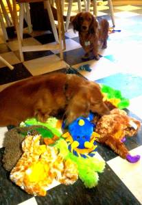tucker with toys