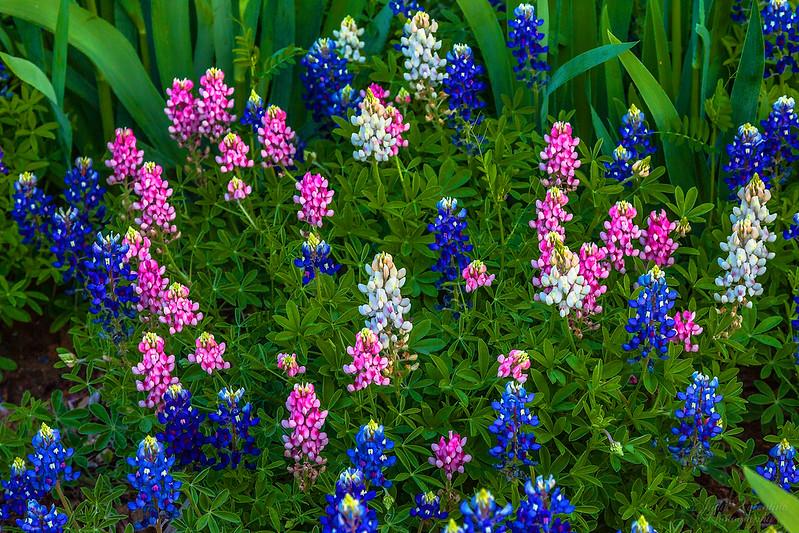 https://i0.wp.com/judyv.smugmug.com/Clark-Gardens/Clark-Gardens-2012/i-k2jRHwz/0/L/JVP_20120327_ClarkGardens5521-L.jpg