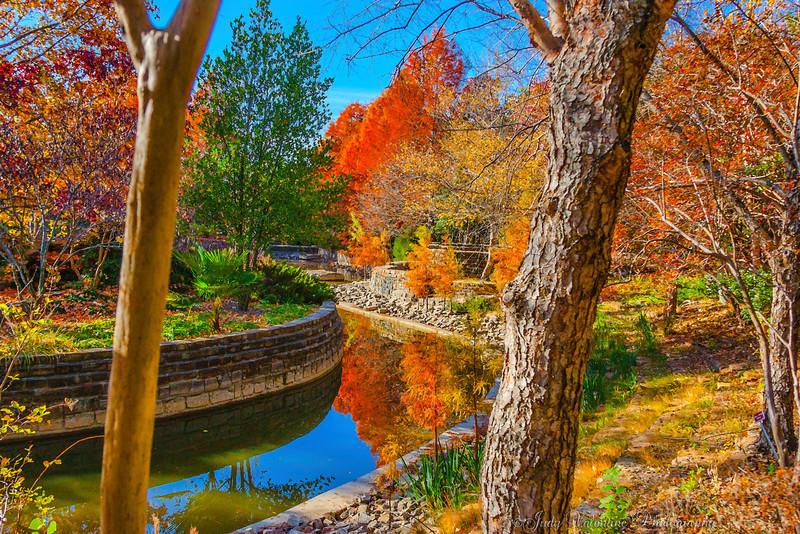 https://i0.wp.com/judyv.smugmug.com/Clark-Gardens/Fall-at-Clark-Gardens-2012/i-WFcq56D/0/L/JVP_20121120_ClarkGardens4212-L.jpg