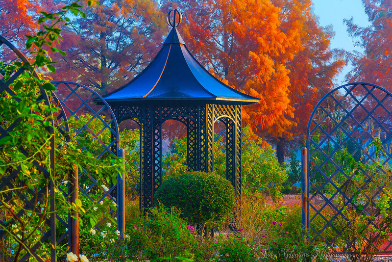 https://i0.wp.com/judyv.smugmug.com/Clark-Gardens/Fall-at-Clark-Gardens-2012/i-sPDsvmQ/0/L/JVP_20121120_ClarkGardens4107-L.jpg