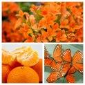 Orange-moodboard