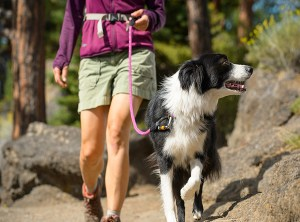 Paseando con Border Collie con Correa Knot-A-Leash de Ruffwear
