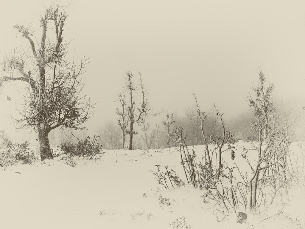 landschaft schwarz-weiß