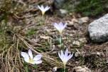 Gotitas de flores