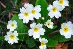 Otra preciosa flor ¿su nombre?