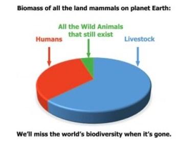 Biomass map