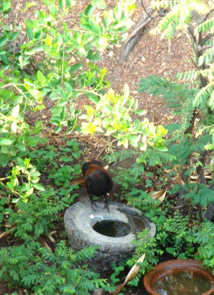 Look who is in my garden (2/4)
