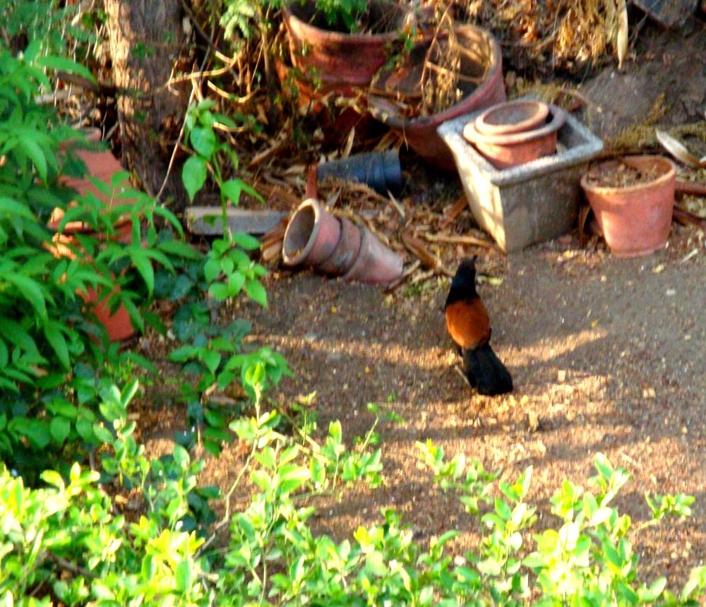 Look who is in my garden (4/4)