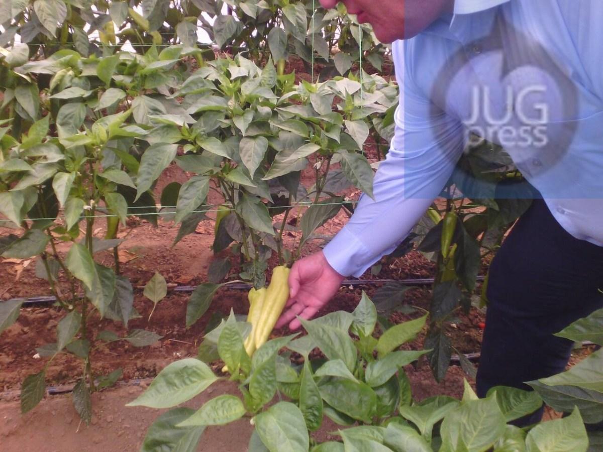 Gradonačelnik posetio proizvodjače paprika