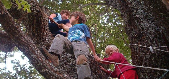 tres chicos en una rama de un árbol en escuelas activas