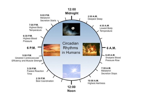 Meridian Clock  Honoring Your Circadian Rhythm For