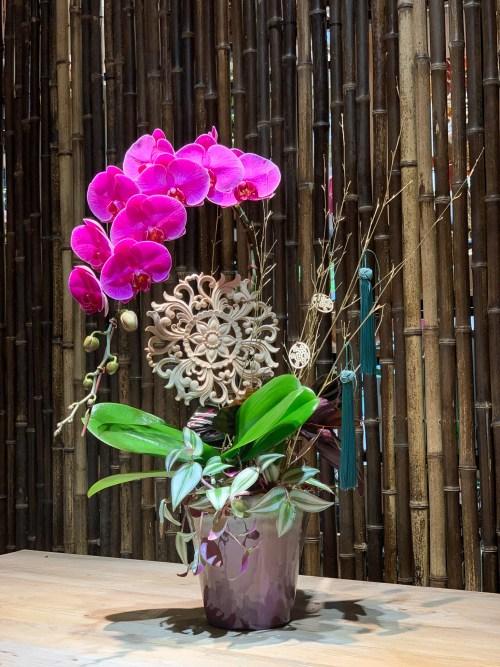 Tai Wan Orchids