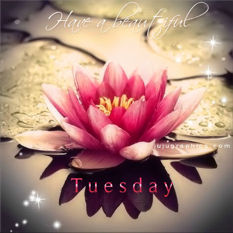 Have A Beautiful Tuesday 9 Graphics Quotes Comments