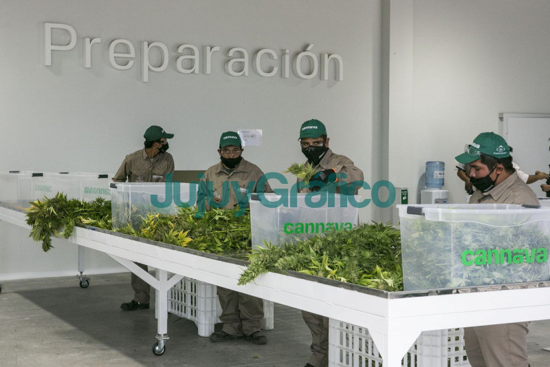 Nuevo Complejo fraccionador de marihuana medicinal de Cannava 1