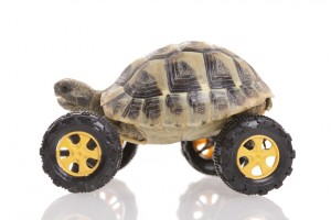 Turtle on the wheel