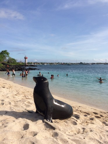 Beaches are shared among humans and sea lions. The latter will sometimes want your spot: nothing to do but move over!