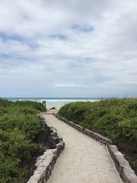After a 3km walk, we finally reach 'Tortuga Bay'