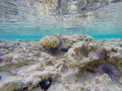 The water is so transparent that you wouldn't even need an underwater camera to photograph the shallow reef
