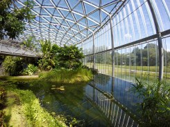 The Gyoen gardens also have a spectacular greenhouse